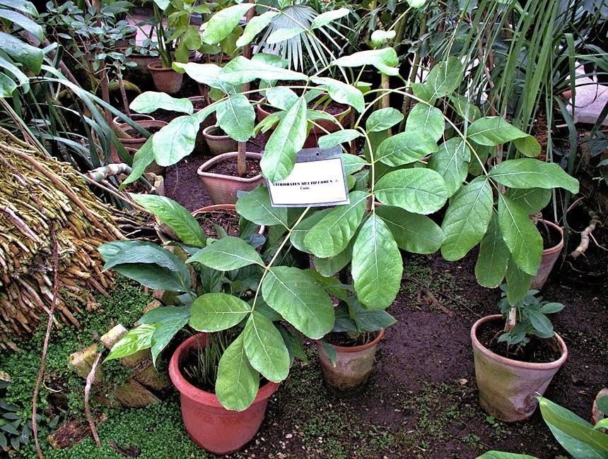 flori denumite gresit gradina botanica iasi