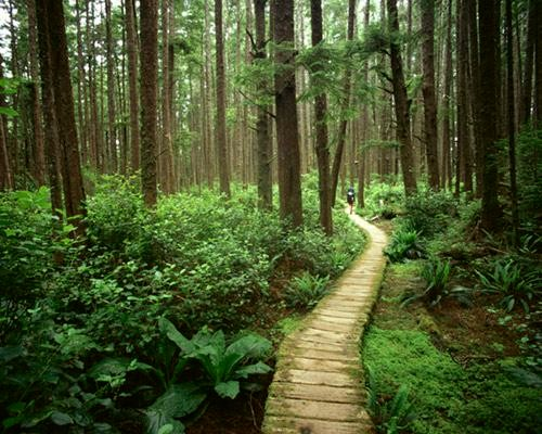 Forest Bathing Nature S Path