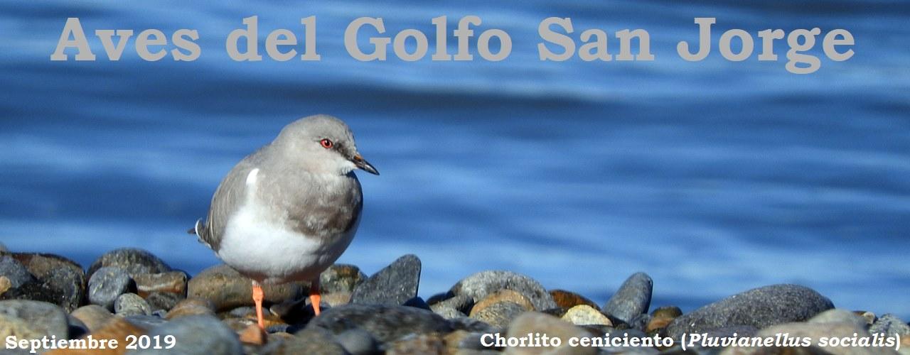 Aves del Golfo San Jorge