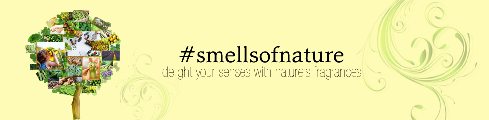 Casa de Lorenzo Soaps Oils Aromatics Blog