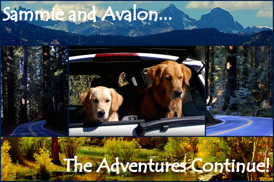 The Adventures of Sammie and Avalon
