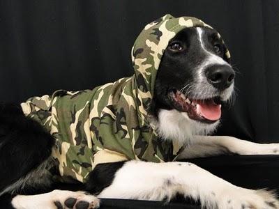 animals  Dicas de Como Vestir Seu Cão