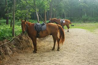 Cudillero, Lamuño, Aventuras a caballo