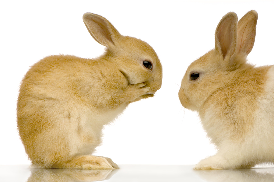 The UK Sex Facts For Quickies - Randy Rabbits Dating!