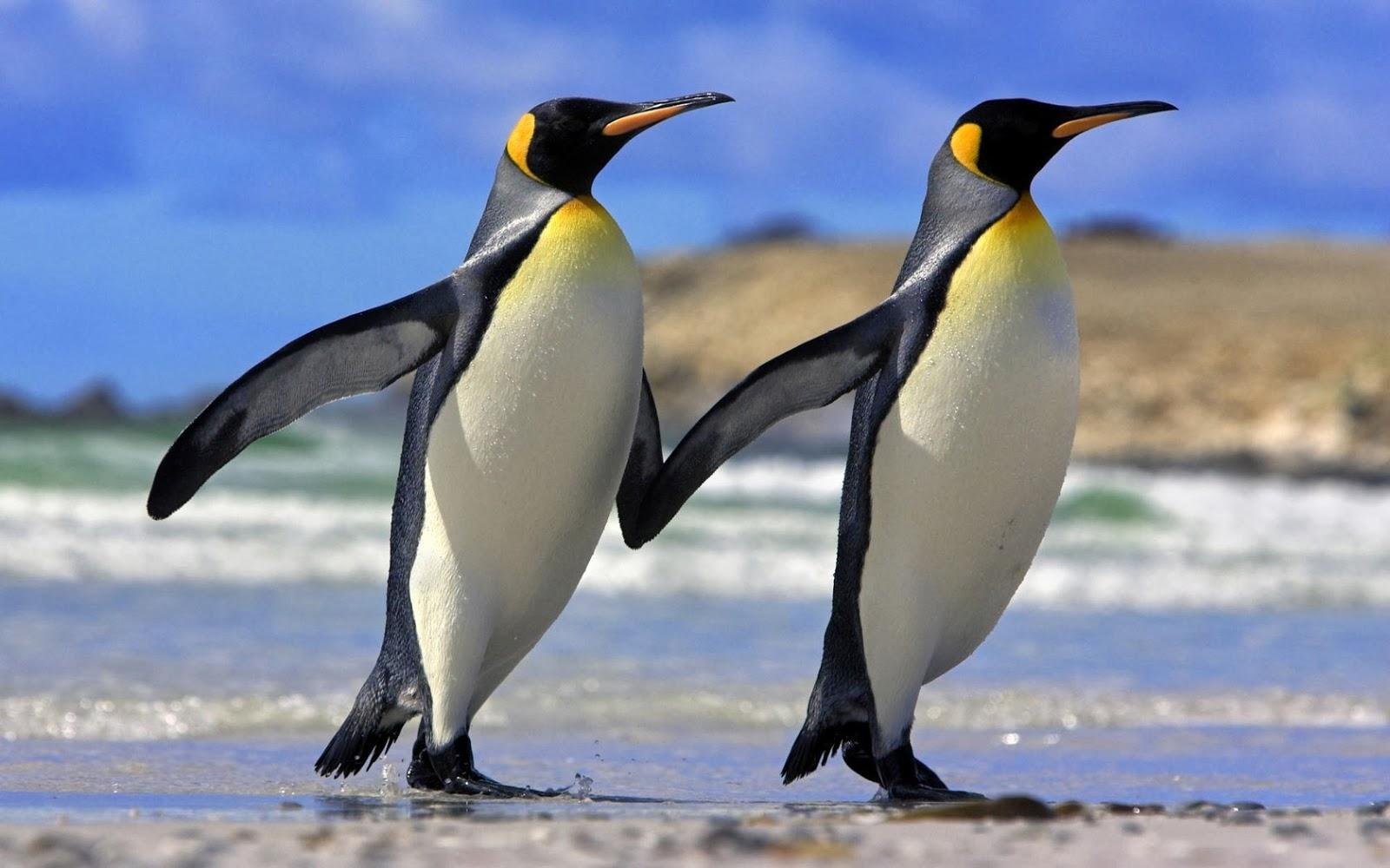 Animales, Salvajes Imágenes gratis en Pixabay