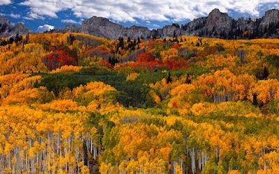 Una mirada sobre el bosque - Los colores del otoño