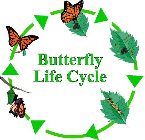Image result for butterfly life cycle gif