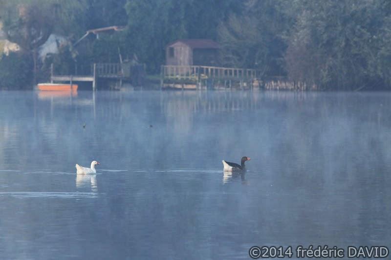 matin lac brume oies étang Vert-le-Petit Essonne