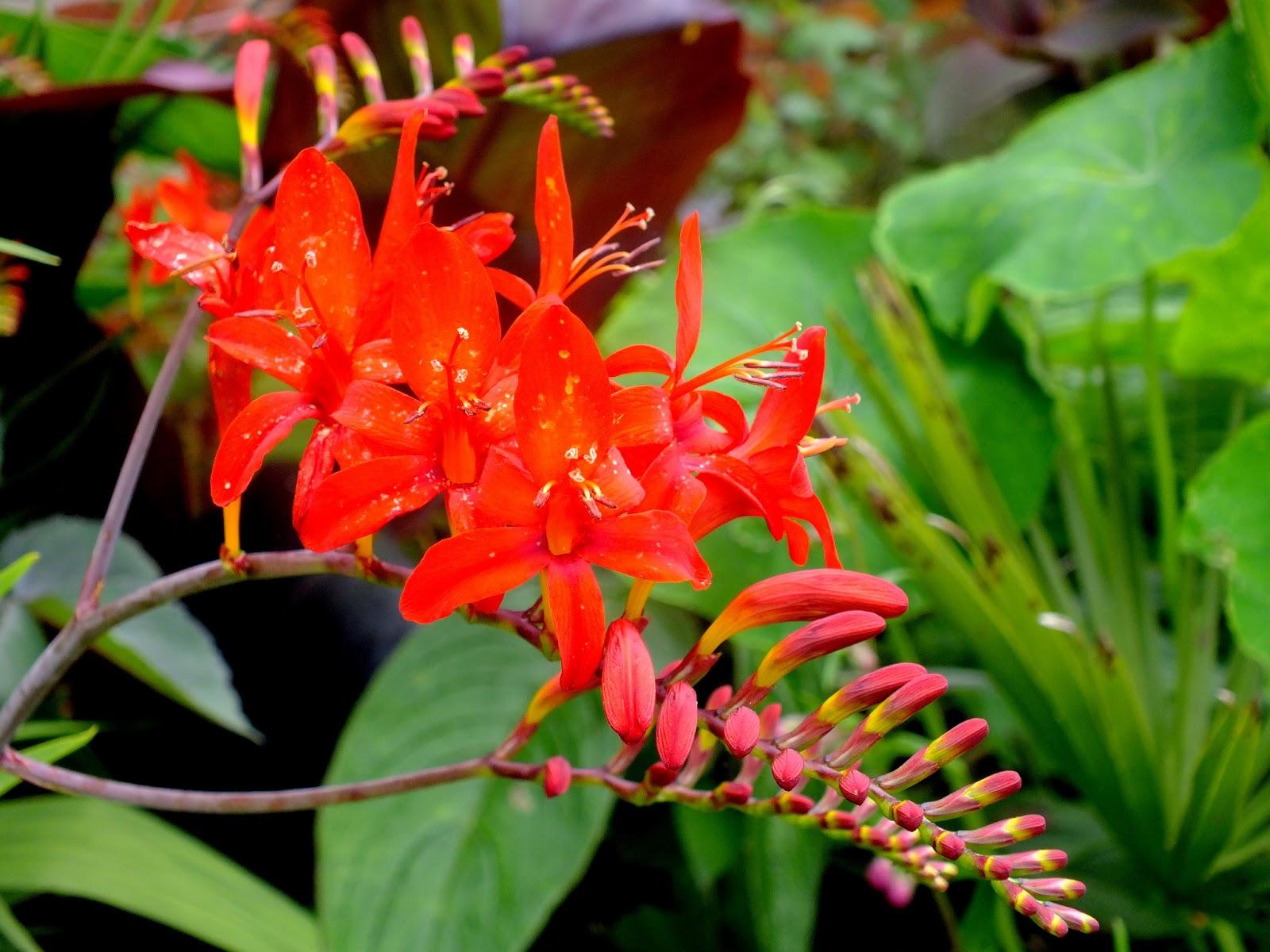 piekny kolorowy kwiatek, roślina