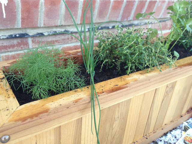 my favorite things apartment herb garden