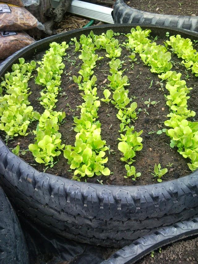 decoracao de jardim gastando pouco:Blog de Arquitetura e Decoração : Decorar Gastando Pouco II