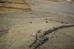 Di Tempat Terkering di Dunia, Ratusan Tulang Paus Muncul