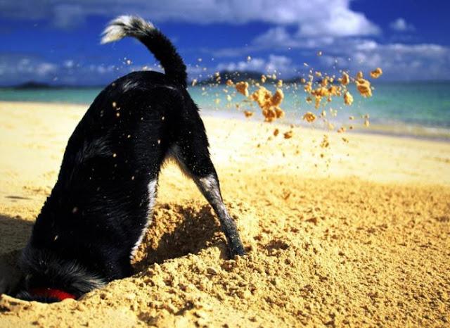 لماذا تقوم الكلاب بدفن العظام في التراب؟ gallery-preview.jpg