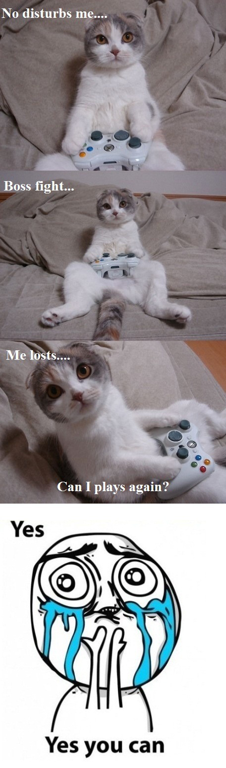 Cat Playing Video Game - Boss Fight