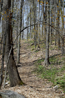 an upward sloping footpath in Scout Valley, Orillia