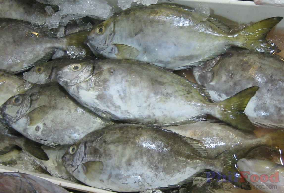 Philippine Fish Species List Of Common Fish In The
