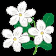 ジャスミンのイラスト(花)