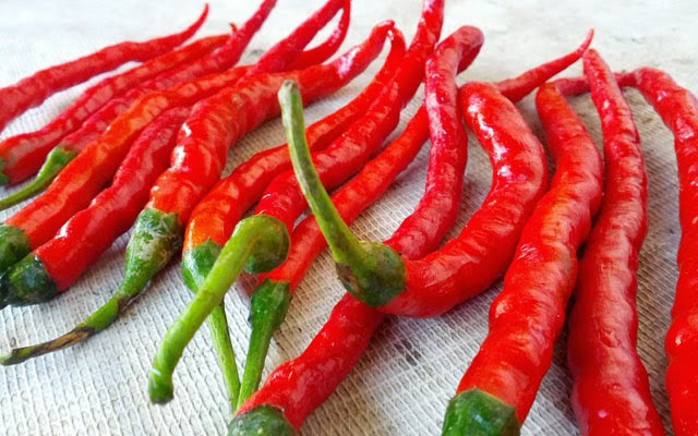 How to grow chillies in a polybag