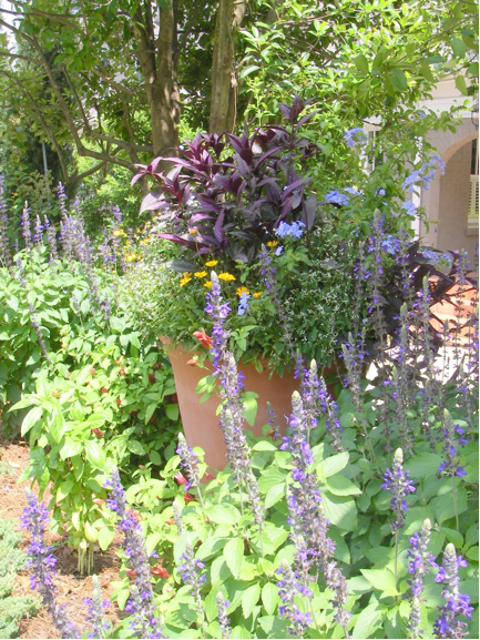 Italian terra cotta pot with annuals home garden design