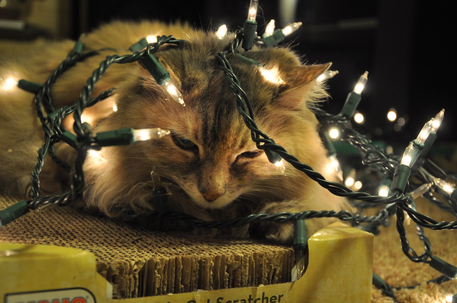 365 Days of DIY: Do you have too many white Christmas lights?