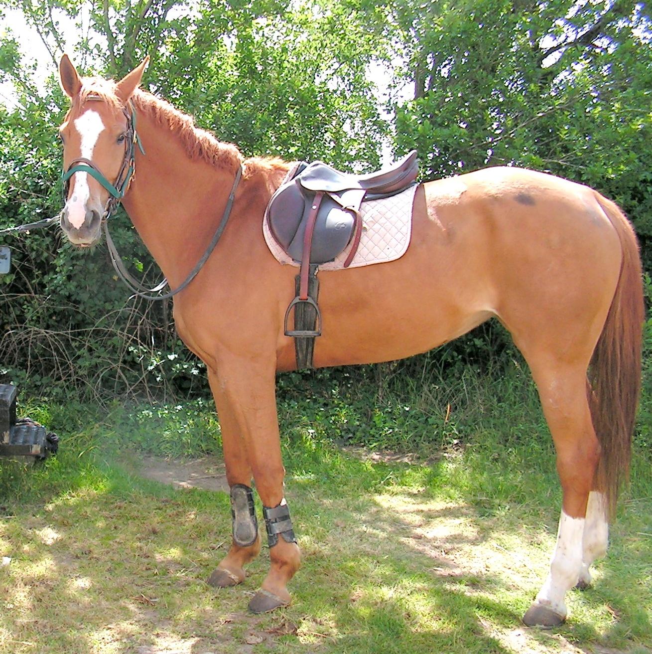 Les chevaux - Porte de box pour chevaux a vendre ...