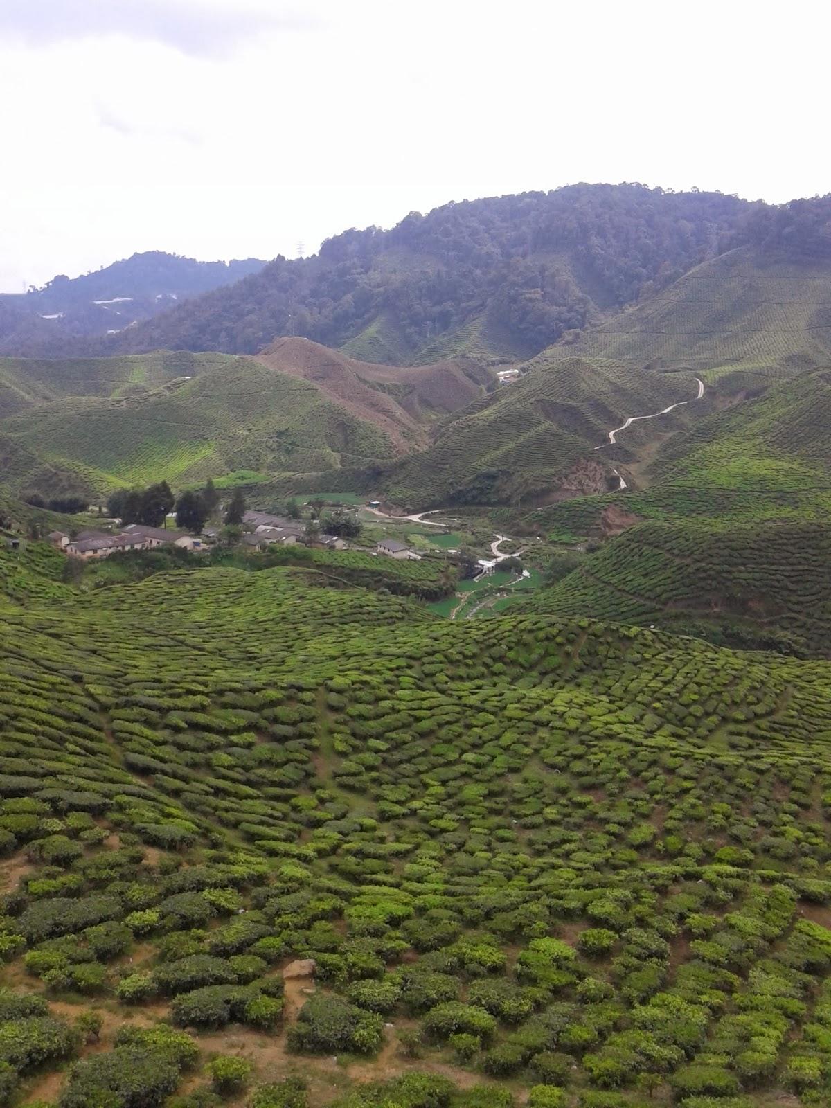 Cameron Highland, ladang teh, hentian, pemandangan cantik, kebun strawberi