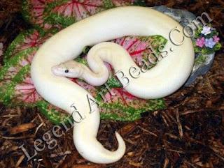 Ivory Mainly Snake