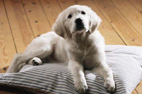 Cachorros são transformados em salsichas em alguns lugares da Suíça GettyImages