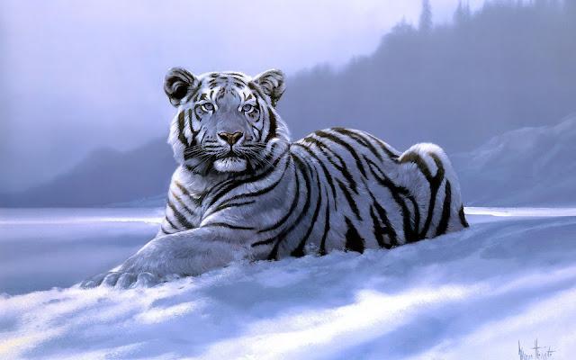 Fotos de Tigres Blancos en la Nieve - Imagenes de Animales Salvajes