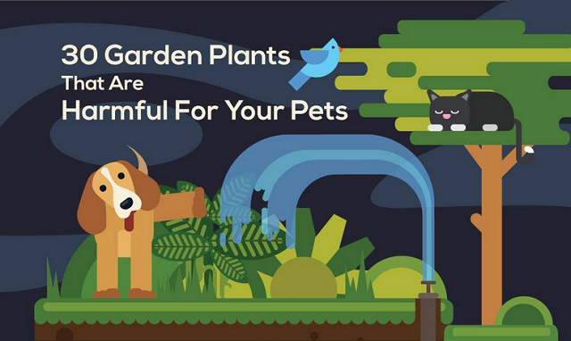 30 Garden Plants That Are Harmful for Pets