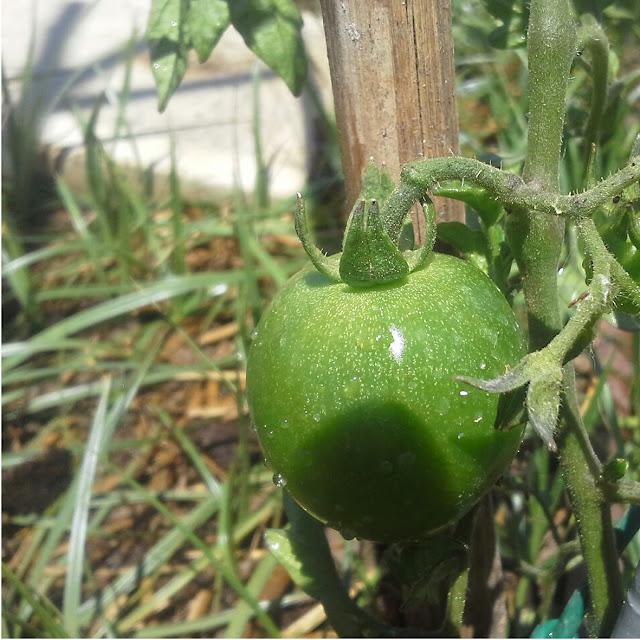 cris b, crisb, huerto ecologico, hortals, huerto urbano, ecologia, sostenibilidad