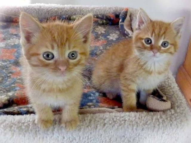 Foto Kucing Lucu Imut dan Menggemaskan 35