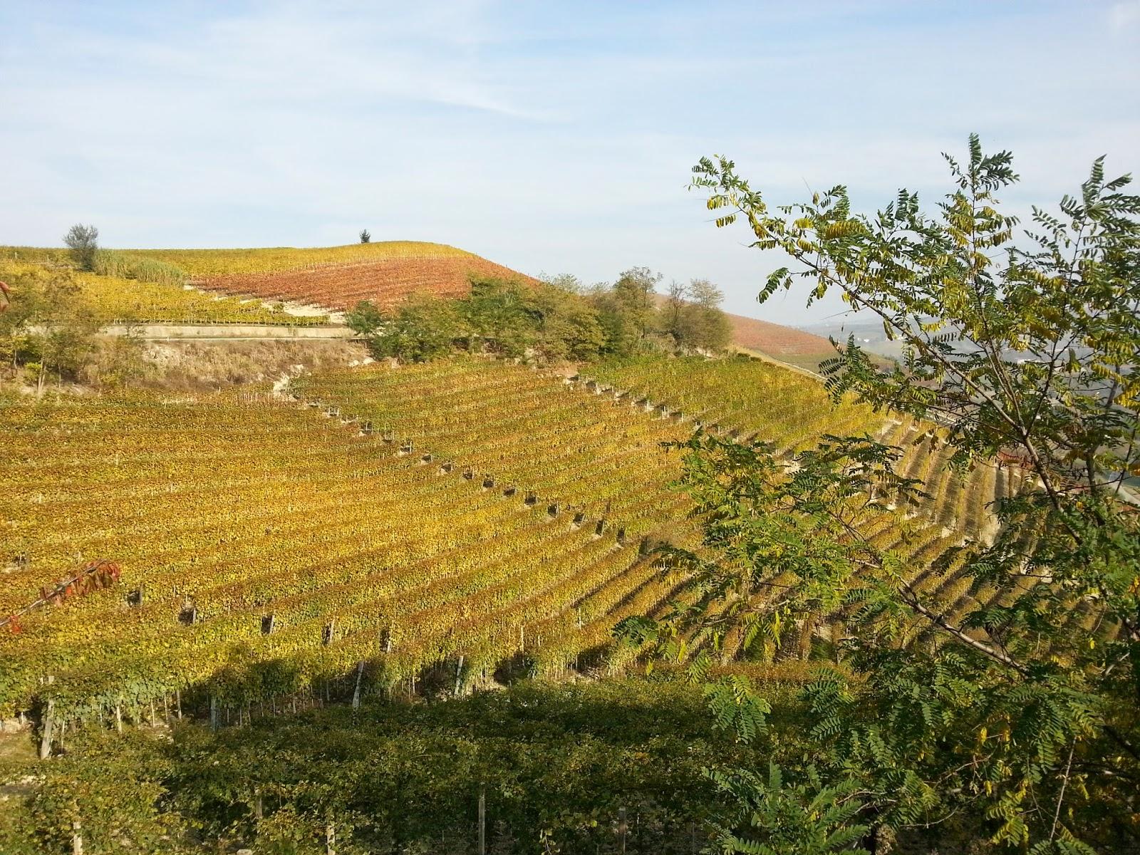 Vi si produce il vino arneis