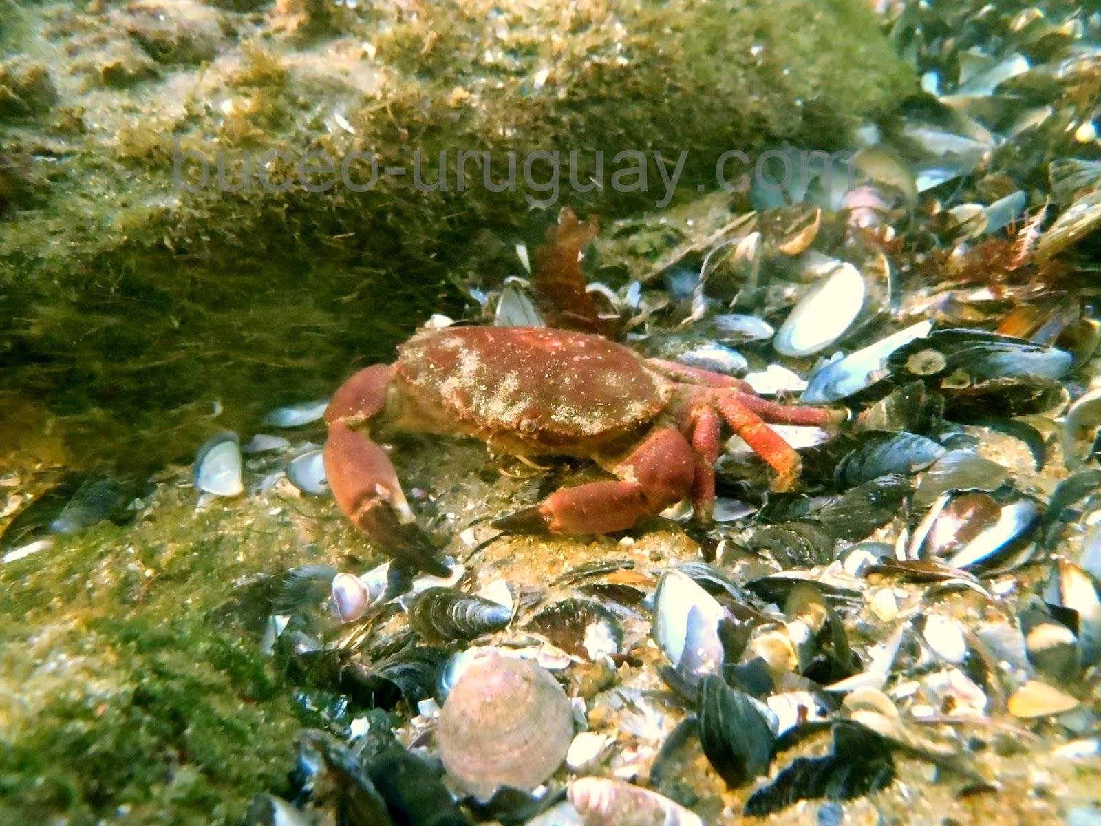 Fauna marina Uruguay