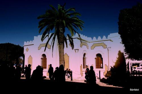 palm tree........