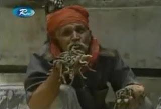 makan ular