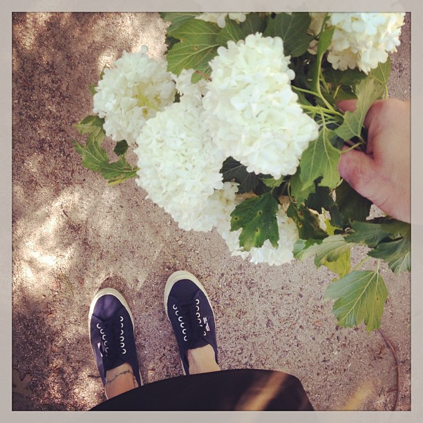 superga navy sneakers, white snowball flowers
