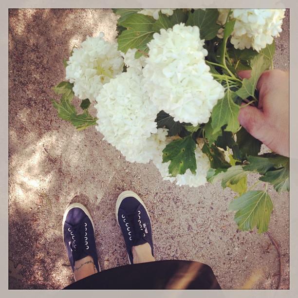 superga navy sneakers, white snowball flowers