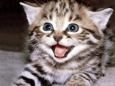 Alasan Kucing Noleh di Panggil Pus