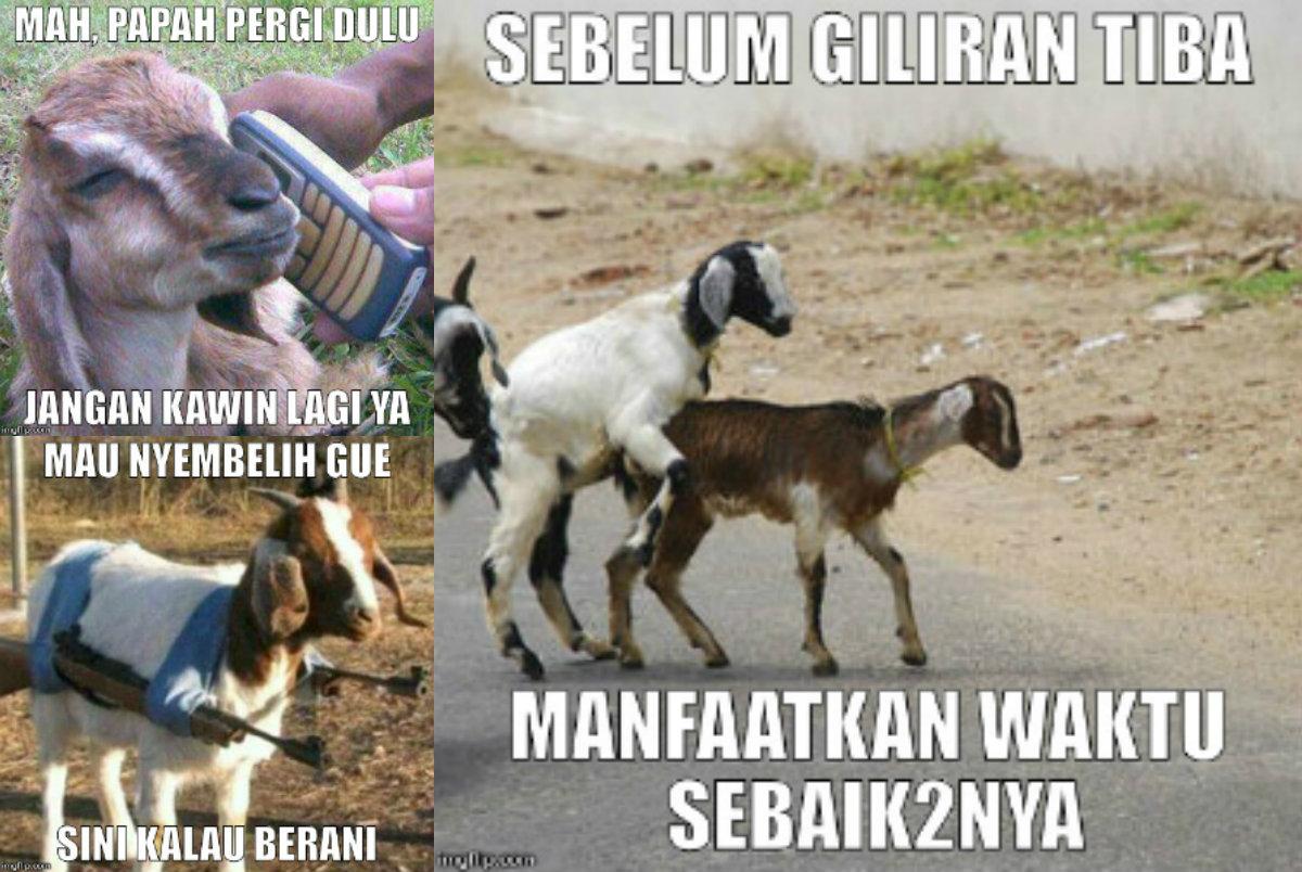 Meme Lucu Qurban Kurban Terbaru Gambar Idul Adha  Gokil Super Ngakak