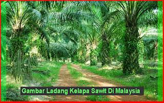 Gambar Ladang Kelapa Sawit Di Malaysia