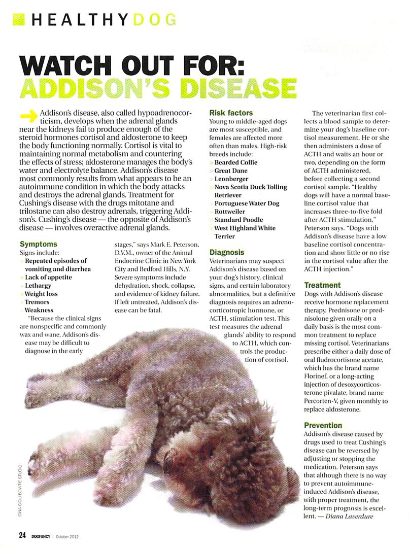 addison disease in dogs, Cephalic Vein