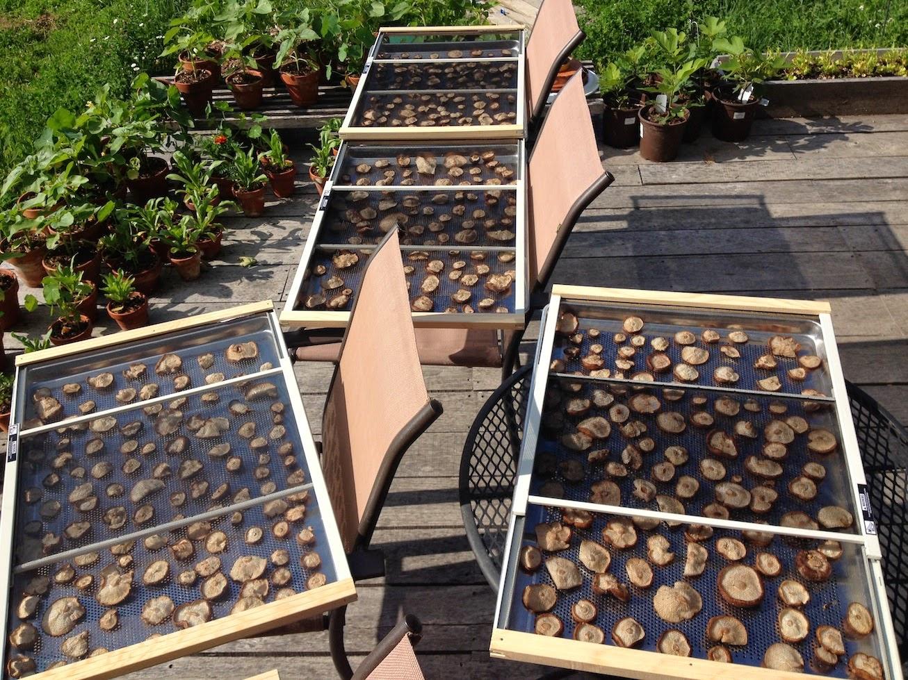 Wellspring forest farm - Wild mushrooms business ideas ...