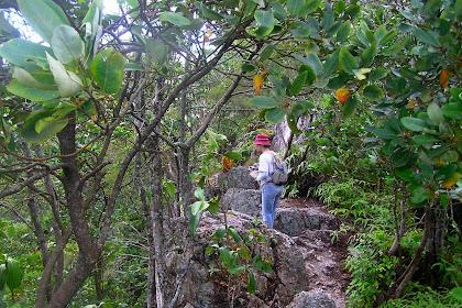Hiking Klang Valley