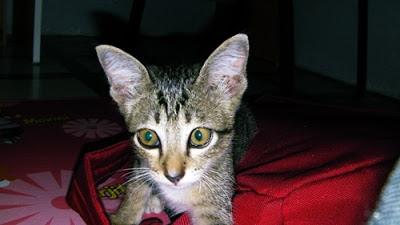 Anak kucing ini diberi nama Siti!