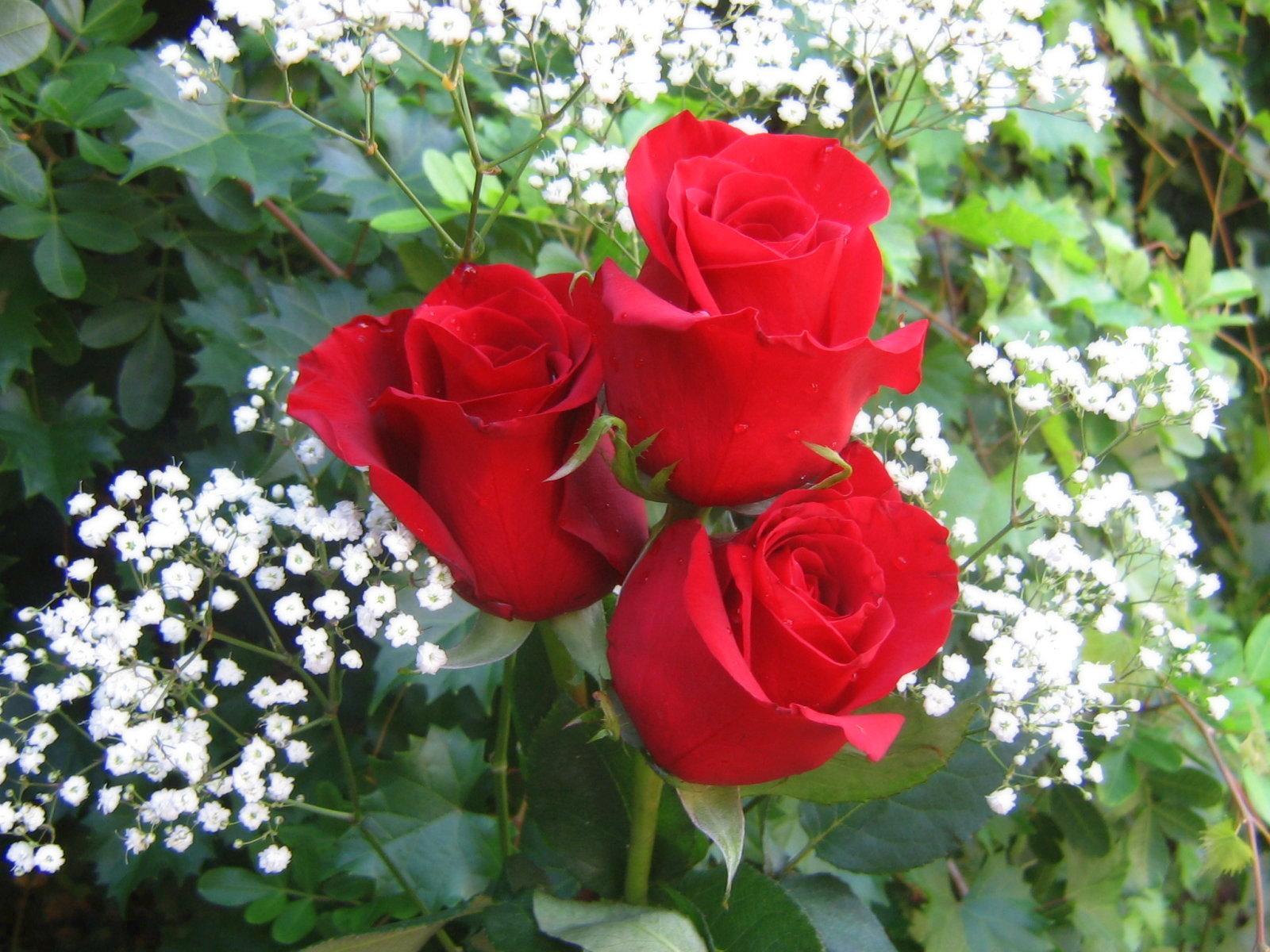 http://2.bp.blogspot.com/-3djrUHIn-r8/UNAsVMn7U2I/AAAAAAABBPQ/jlfOSZLkQpQ/s1600/bm-image-715226.jpeg