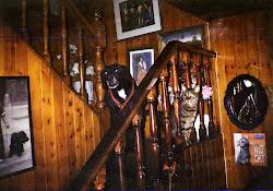 Dino e Panchito, (o meu Can, e o meu Gato).