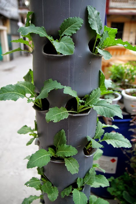 growing vegetables in the plastic tube | Vietnam Outdoor Furniture