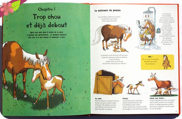 Tout sur le cheval... et le reste de Antoinette Delylle et Grégoire Mabire - éditions Le Pommier