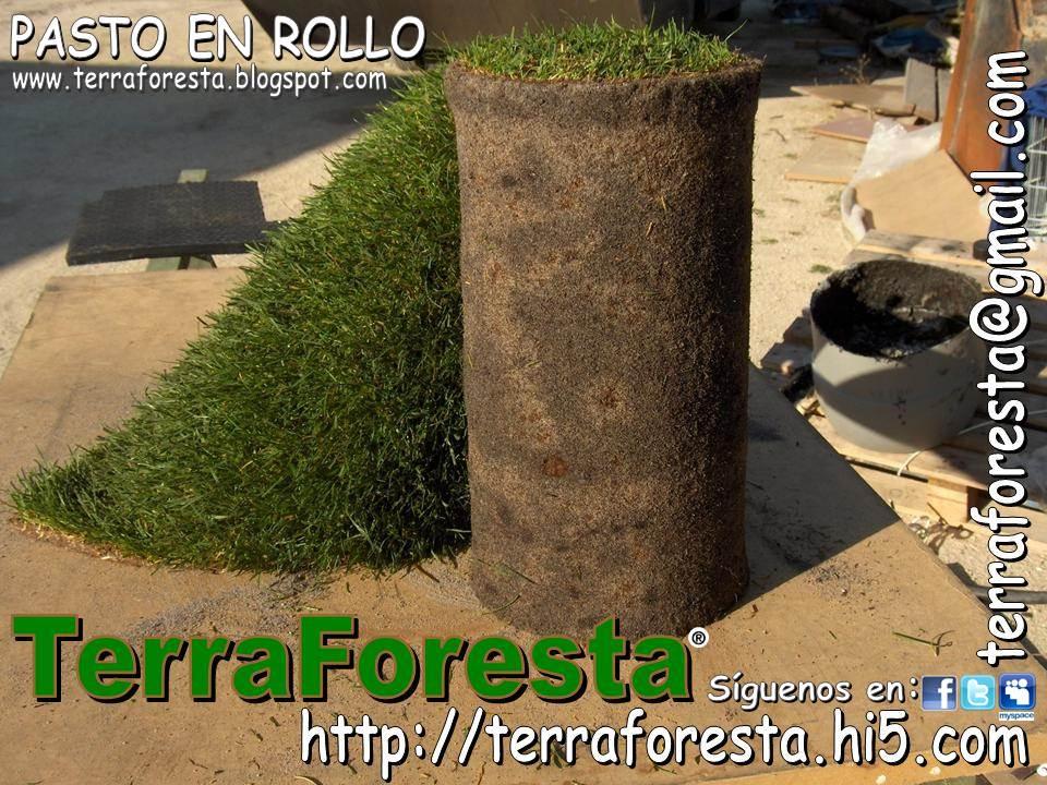 Terraforesta septiembre 2011 for Cesped en rollo